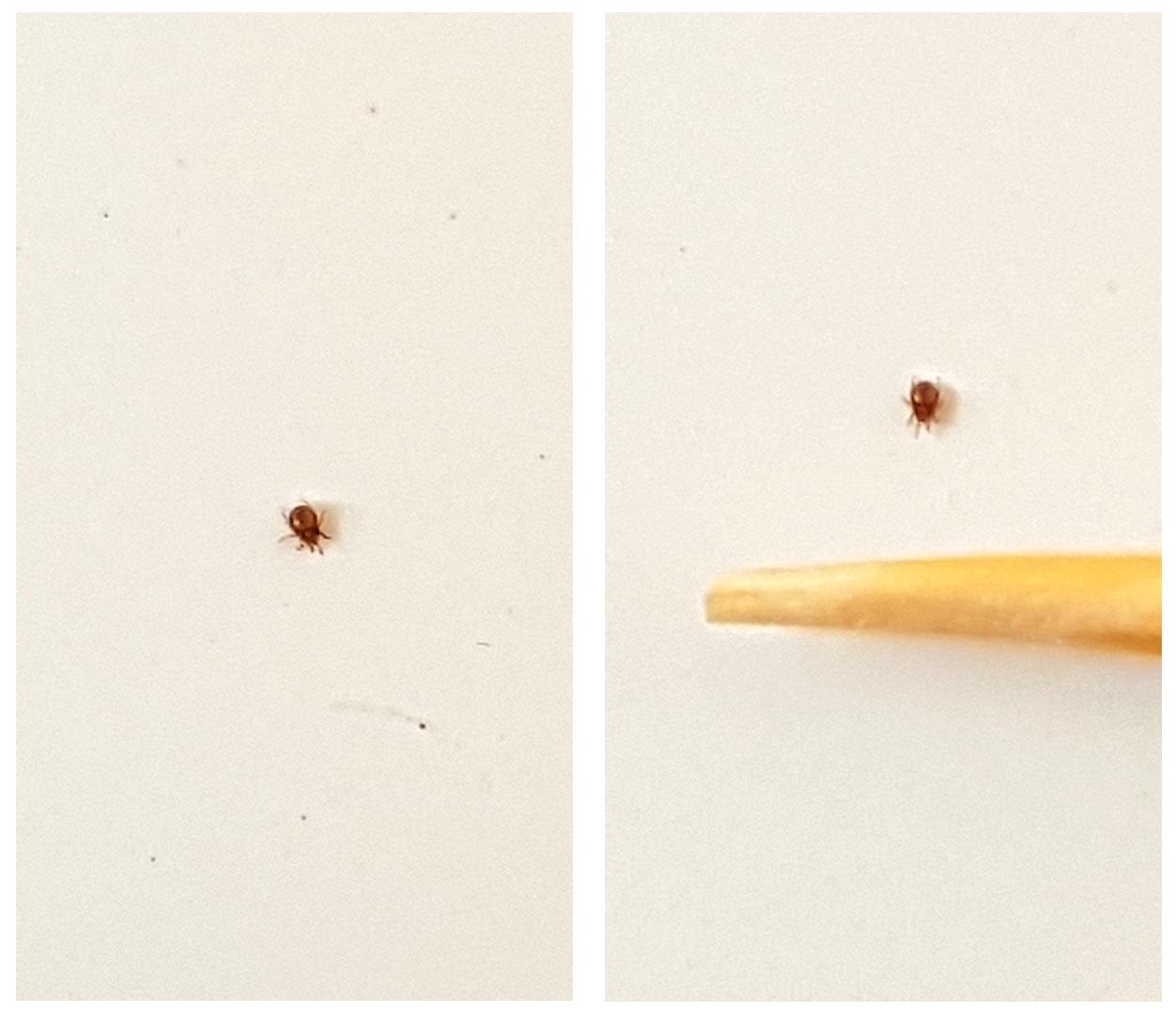 Identification minuscules bêtes noires XSed8cfdTDm3SSOFpaldegsqgAdvZn